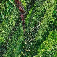 河北植物墙价格
